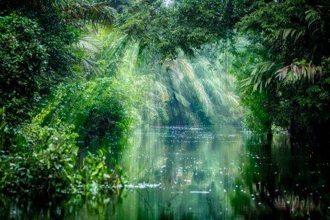 A photo of Tortuguero National Park, a rainforest in Costa Rica.