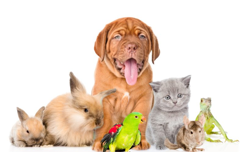A variety of cats, dogs, rabbits and other pets pose for a cute picture