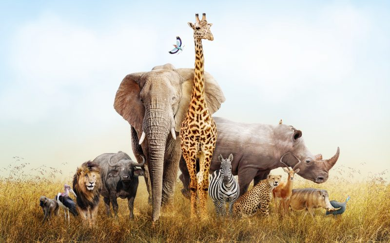 Photo of a group of African safari animals composited together in a scene of the grasslands of Kenya.